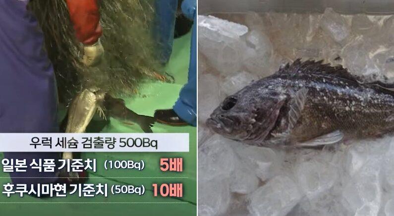 [좌] MBC 뉴스데스크, [우] NHK