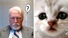 엄숙한 법정에 갑자기 등장해 참석자들 동공지진 일으킨 '고양이 변호사'