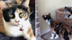 가스밸브에 코 대고 '킁킁' 냄새 맡던 고양이 호기심이 집사 가족을 살렸다