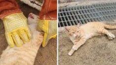 그물에 목이 감겨 호흡 멈춘 고양이의 심장을 다시 뛰게 해준 소방관 (영상)