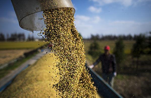 지난해 중국은 1억 4천만t의 곡물을 수입해 역대 식량 수입 기록을 경신했다.   JOHANNES EISELE/AFP via Getty Images