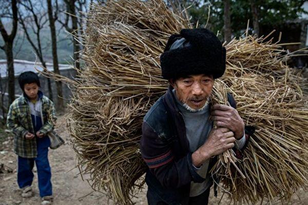 중국 공산당은 농촌의 빈곤 퇴치에 성공했다고 주장했지만, 농민들은 더 심각한 가난으로 내몰리고 있다.  Kevin Frayer/Getty Images