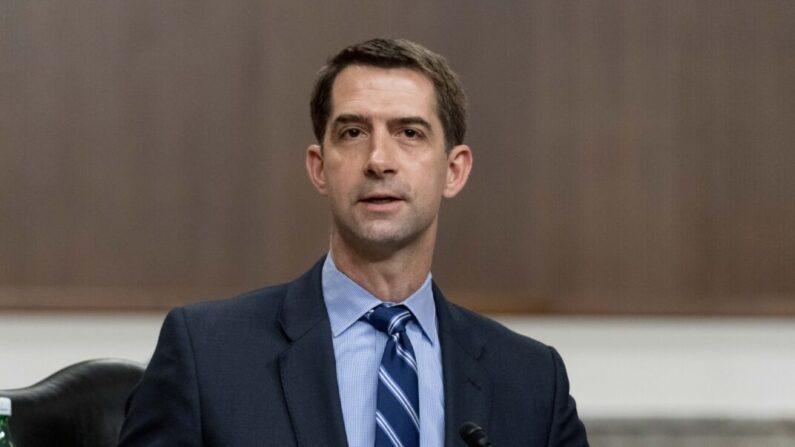 톰 코튼 미 공화당 상원의원   Andrew Harnik-Pool/Getty Images