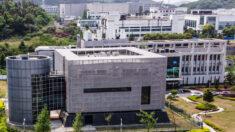 우한에 바이러스 연구시설 또 들어선다…축구장 10개 규모